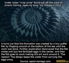 19 Surreal Images (and Their Mind-Blowing Explanations)