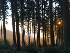 Sunset in the woods Woods, Celestial, Sunset, Photography, Outdoor, Fotografia, Outdoors, Photograph, Woodland Forest