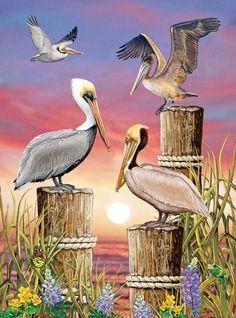 Pelicans-Vertical