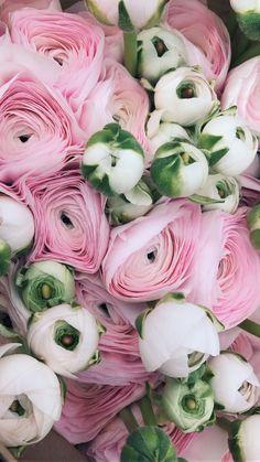ranunculus and anemones Tulips Flowers, Summer Flowers, Beautiful Flowers, Ranunculus, Peonies, My Flower, Flower Power, Sweet Briar College, Love Rose