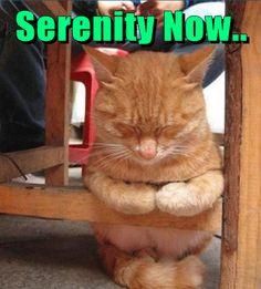 Serenity Now..