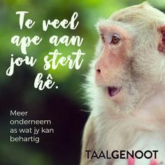 Te veel ape aan jou stert hê... Afrikaanse Idiome & Uitdrukkings ##Taalgenoot Afrikaans Language, Afrikaans Quotes, Idioms, Laugh Out Loud, South Africa, Homeschool, Classroom, Teaching, Education