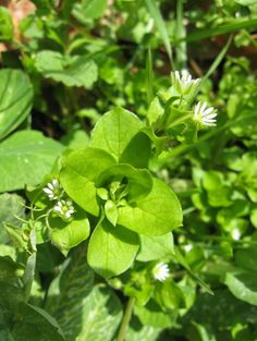 Lessons on Survival and Resilience I Could Learn From Weeds | Little House in the Suburbs
