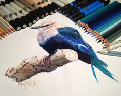 Realistic Animal Drawings Surrounded By The Tools Used To Create Them