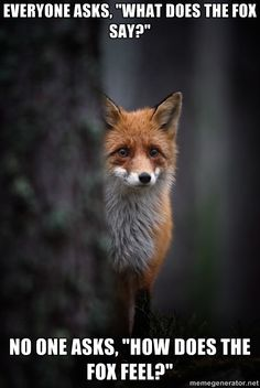 fox people | Sad Fox Hates When People Ask What Does The Fox Say
