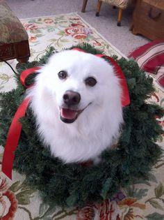 News from Eskie Rescuers United American Eskimo Dog Rescue Inc - Inbox - Yahoo! Mail