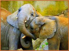Sweet Elephant Love.... (I could put this on my HUGS board too)