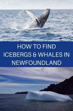 Traveling to Newfoundland? Check out this article about nature and wildlife places to visit in Newfoundland. Canada travel, places to see in Canada, things to do in Newfoundland, Newfoundland travel guide, wildlife in Newfoundland Newfoundland Canada, Newfoundland And Labrador, Newfoundland Icebergs, Quebec, Vancouver, Alberta Canada, Toronto Canada, Gros Morne, Visit Canada