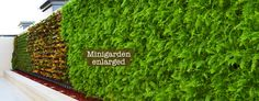 mini garden vertical planting