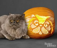 Persian Cat Pumpkin.....this kitty almost looks like my Toto.
