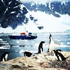 You'll get two landings per day onboard the Ortelius so plenty of time to snap a penguin or two. Pic @waterzhang Explore Antarctica on the Ortelius cruise http://ift.tt/2lFkCwR