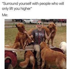 Compilation of Dog Memes (pt. 1) - Imgur #funnydoglaughter #dogsfunnylaughter