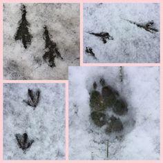 Tierspuren im Schnee! #edgarten #gartenblog #12telBlick Collagen, Abstract, Artwork, Sunrise, Dogs, Animals, Summary, Work Of Art, Auguste Rodin Artwork