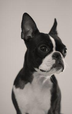 Best food for your pet! Le meilleur pour votre animal! www.ovenbakedtradition.com