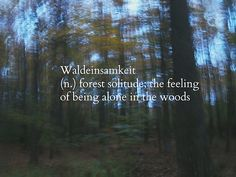 Waldeinsamkeit. One of my favorite sensations.