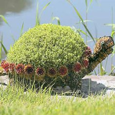 SheKnows Gift Guide: Turtle Topiary Form