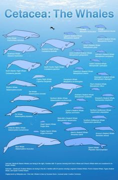 Whale chart