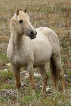 Image result for equine images