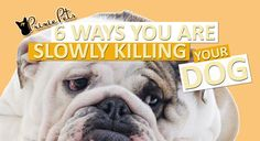 All dogs go to heaven, but it can wait.   Here are some ways you can delay that day -