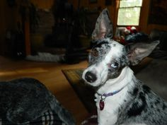 Moonshine, Pet of the Week 12/24/12