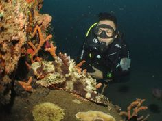 Reef fish Diving, Fish, Painting, Art, Art Background, Scuba Diving, Pisces, Painting Art, Kunst