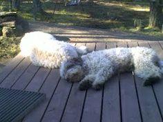 Our sleepy ones:)