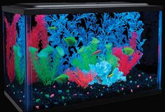 Glow In The Dark Aquarium - Take My Paycheck - Shut up and take my money! Latest Gadgets, Cool Gadgets, Aquarium Kit, Take My Money, Cool Technology, Fun Learning, Cool Kids, The Darkest, Glow