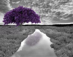 Purple Gray Tree Landscape Wall Art Home by LittlePiePhotoArt, $18.99