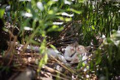 Fukuoka, conheça a cidade japonesa que é o paraíso dos gatos 201311172305341 580x386