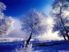 Fondo de pantalla con unos preciosos árboles llenos de nieve. Naturaleza en su máximo esplendor!