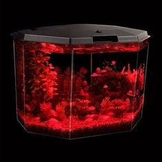 Acrylic Hexagon Aquarium
