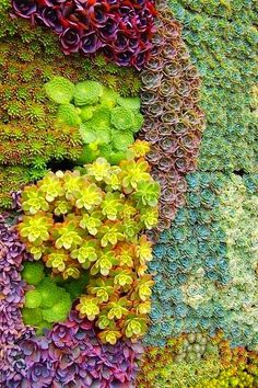 Wall of Succulents, Instead of framing a picture, why not a whole garden | Outdoor Areas