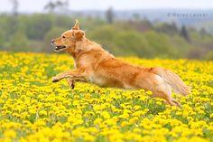 yellow by Maaira.deviantart.com on @deviantART