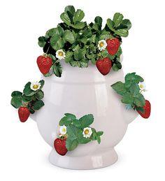 Ceramic strawberry planter