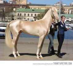 The most beautiful horse in the world