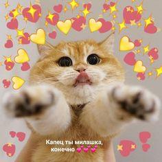 Cat Mem, Hello Memes, Sweet Memes, Heart Meme, Cute Love Memes, My Boo, Kaneki, Stupid Memes, Love Pictures