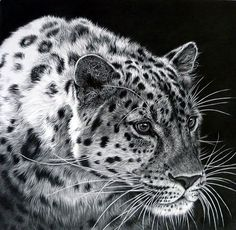 Pencil Portrait Mastery - Realistic Animal Pencil Drawings (22) - Discover The Secrets Of Drawing Realistic Pencil Portraits