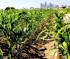 Urban farming: Why is Los Angeles a Hungry City?