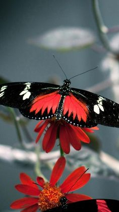 Gorgeous Butterfly and bright colors are amazing...... ♥♡♥♡