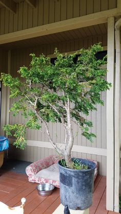 DIY Home Decorations Blog  I Made A Bonsai Tree. Instructions Included.  http://ift.tt/2oygCnA