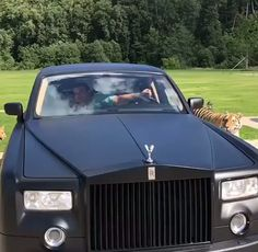 Crazy guys lets full grown tigers into his rolls royce! Crazy guys lets full grown tigers into his rolls royce! Auto Rolls Royce, Rolls Royce Logo, Voiture Rolls Royce, Bentley Rolls Royce, Rolls Royce Wraith, Rolls Royce Black, Rolls Royce Limousine, Rolls Royce Motor Cars, Maserati