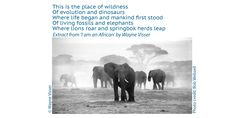 Poetry Wallpaper, Living Fossil, Fossils, Lions, Evolution, Elephant, African, Words, Image