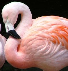 flamingos - loved my by mom, grandma and daughter!