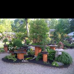 Bonsai display at Bonsai West located on Route 2A/199 in Littleton,  MA. Great selection of established and stock bonsai.