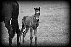 cute baby horse more emily hors emily s horses cute baby horses 1 Cute Baby Horses, Cute Babies, Breath Of The Wind, Country Life, Passion, Animals, Heart, Animales, Animaux