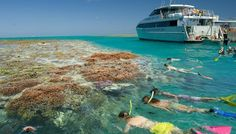 The Great Barrier Reef is the world's largest coral reef. It is also the world's most complex ecosystem and is the home to thousands of species of marine life. Essentially, the Great Barrier...