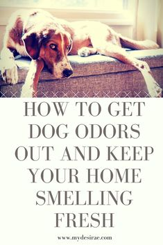 How to get stinky smells from dogs out of your house and keep it smelling fresh. My favorite products for getting urine smell out of carpets and rugs, and keeping couches and dog beds smelling fresh. My Desirae Dog Pee Smell, Dog Smells, House Smells, Pet Urine, Pet Odors, Removing Dog Urine Smell, Pet Odor Remover, Dog Cleaning, Cleaning Tips