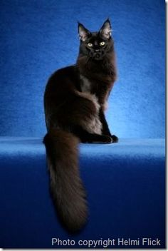 A black Maine Coone cat.  I'd have to find a name other than Max...my heart breaks a little when I think about him and it's been over 10 years.  Best friend an old cat lady could ever have.