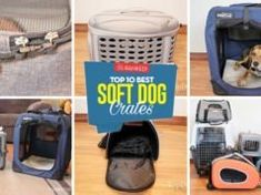 Top 10 Best Soft Sided Dog Crates Soft Sided Dog Crate, Soft Dog Crates, Make Dog Food, Homemade Dog Food, Kidney Recipes, Dog Food Recipes, Dog Kennel Designs, Best Treats For Dogs, Pet Remembrance