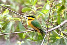 This bird photo was taken in Lake Manyara by our guide Danford, Tanzania